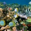 11875261-shoal-of-colorful-tropical-fish-in-a-coral-reef-caribbean-sea1
